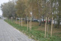 Wycięli las pod tory, teraz sadzą drzewa