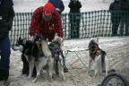 Wyścigi psich zaprzęgów na plaży w Heringsdorfie